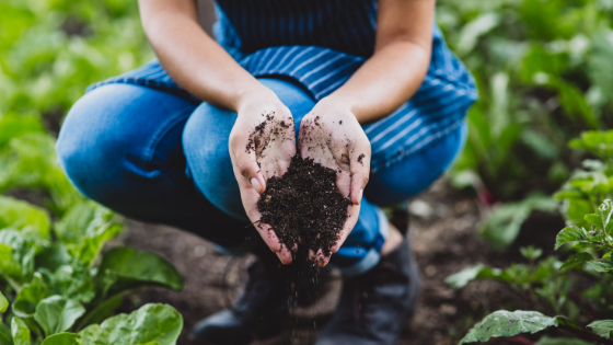 Tips for Nutrient Rich Soil